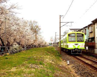 DSCN1436流鉄流山線と桜001.JPG
