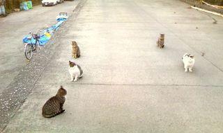 海と猫の仲間たち・二宮001.jpg