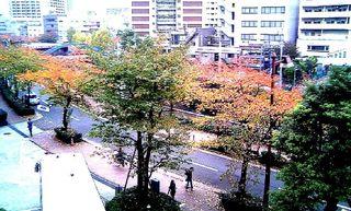 目黒川003.jpg