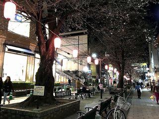 IMG_2666自由が丘010夜の緑道.jpg