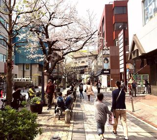 IMG_5607桜の自由が丘008.JPG