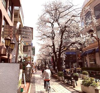 IMG_5612桜の自由が丘010.JPG