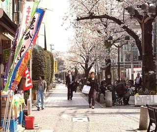 IMG_5614桜の自由が丘006.JPG