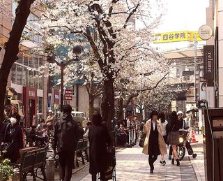 IMG_5615桜の自由が丘004.JPG