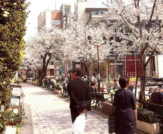 IMG_5618桜の自由が丘007.JPG