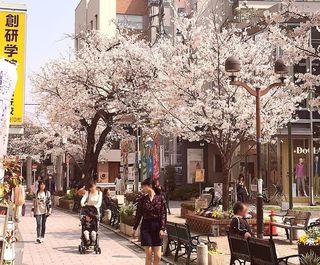 IMG_5621桜の自由が丘003.JPG