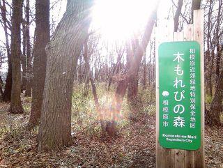 TS3C0836相模原市木もれびの森.JPG