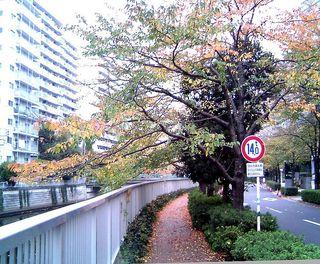 TS3C2521目黒川005目黒川沿い大崎.JPG